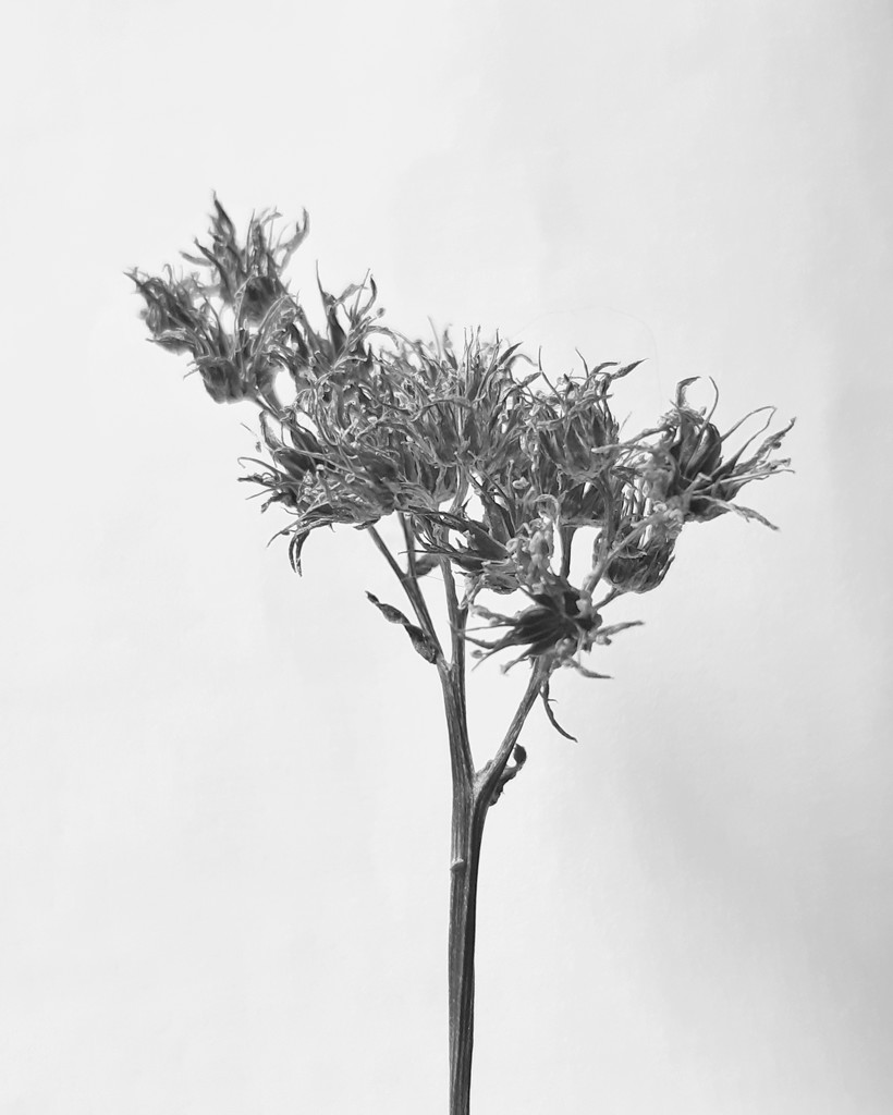 Gone to Seed by salza