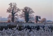 26th Jan 2021 - Early frost