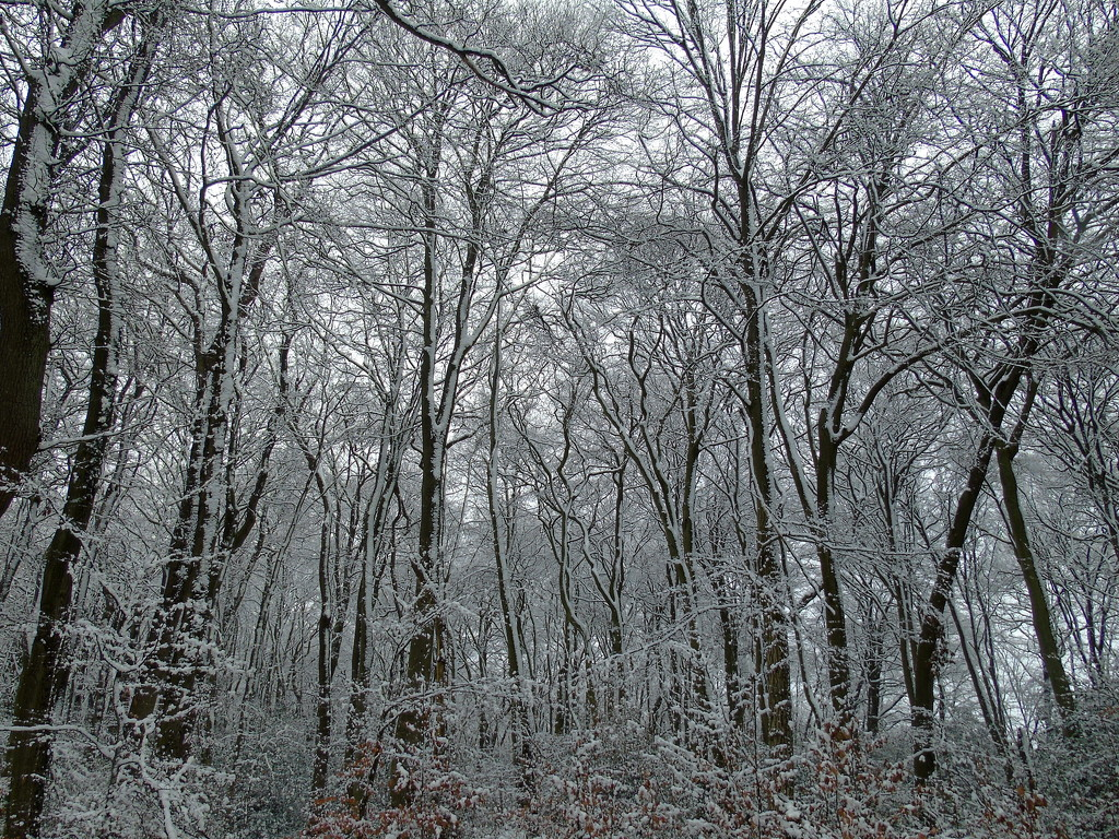 Winter Woodland by bulldog