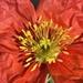 Beautiful bloom by shutterbug49