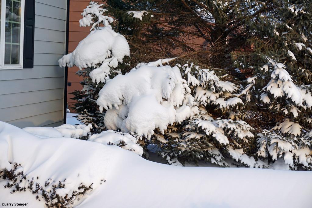 Heavy snow by larrysphotos