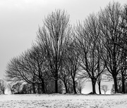 24th Jan 2021 - We got snow!