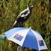 Australia Day - Take 3