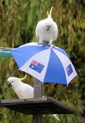 27th Jan 2021 - Australia Day - Take 2