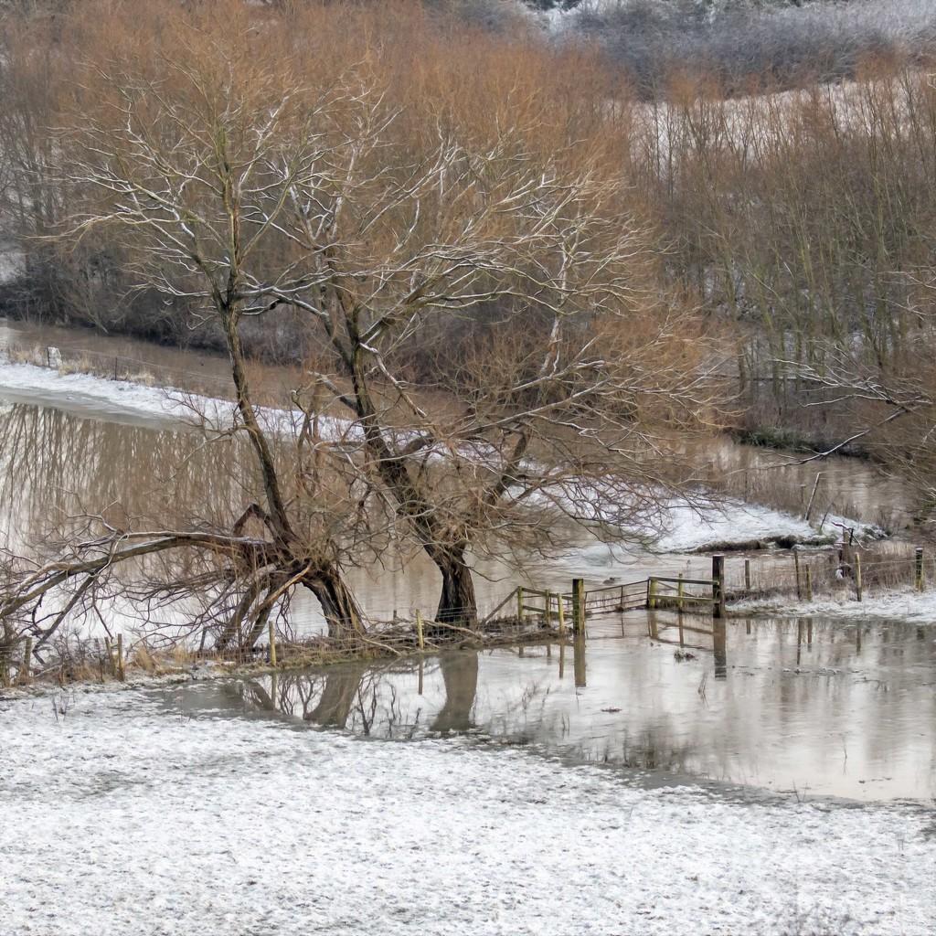 Flooded Field by shepherdmanswife
