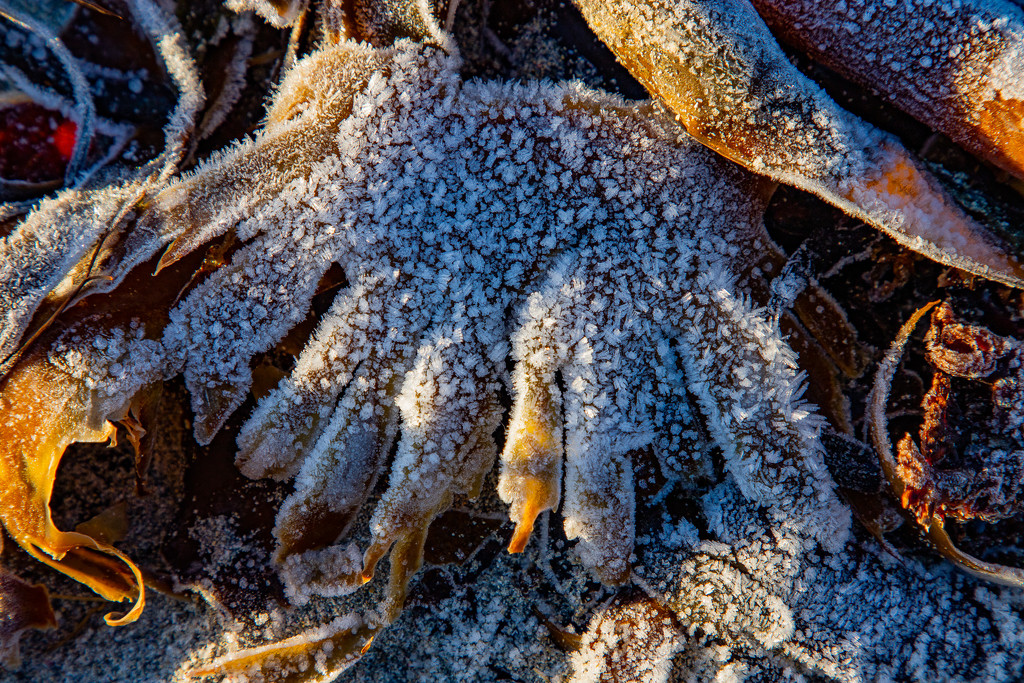 Many Fingered Seaweed by lifeat60degrees