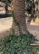 27th Jan 2021 - Tree Hugger