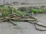 27th Jan 2021 - rope