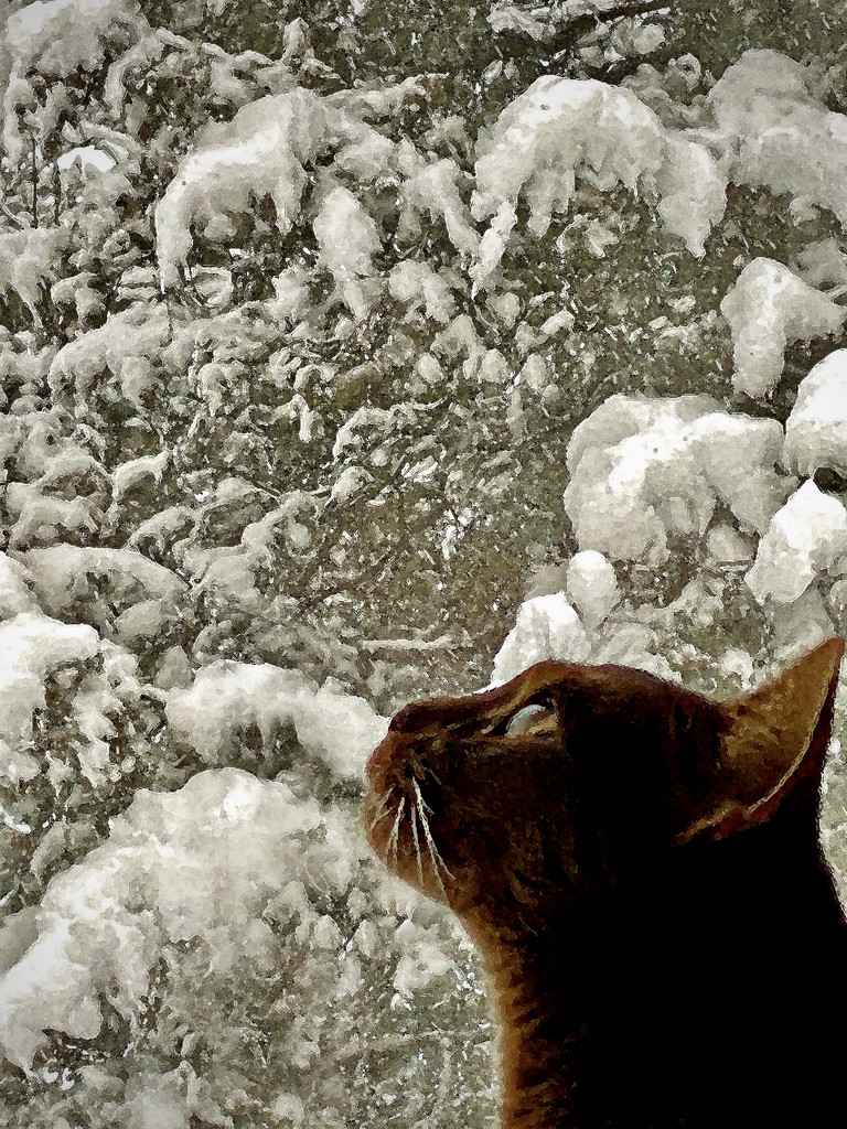 Window watcher by berelaxed