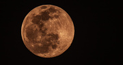 27th Jan 2021 - Almost Full Moon!