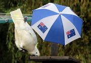 28th Jan 2021 - Australia down under!