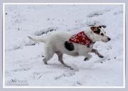 28th Jan 2021 - Daisy Having Fun In The Snow