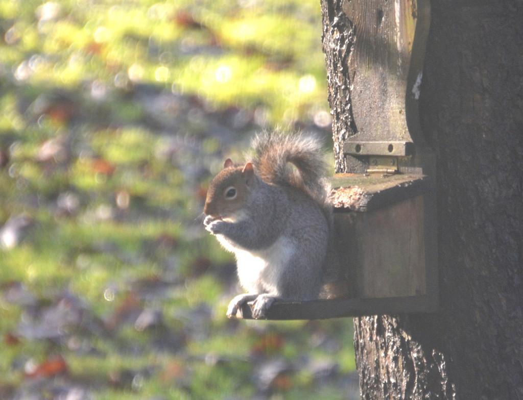 Squirrel by arkensiel