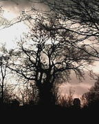 28th Jan 2021 - I like trees