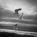 Birds in flight, frozen. by milestonevisualmedia