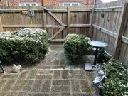 29th Jan 2021 - January Big Snow
