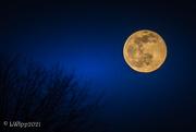 28th Jan 2021 - Wolf Moon
