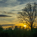 Favorite tree... by thewatersphotos