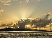 28th Jan 2021 - Sun Rays