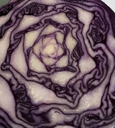 29th Jan 2021 - Pattern inside a Red Cabbage