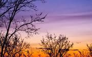 29th Jan 2021 - Evening sky