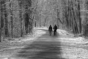 29th Jan 2021 - Winter Walk