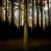 Forest Bathing by darylo