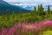 29th Jan 2021 - Summertime in Alaska