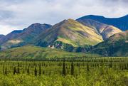 28th Jan 2021 - Fairbanks Landscape