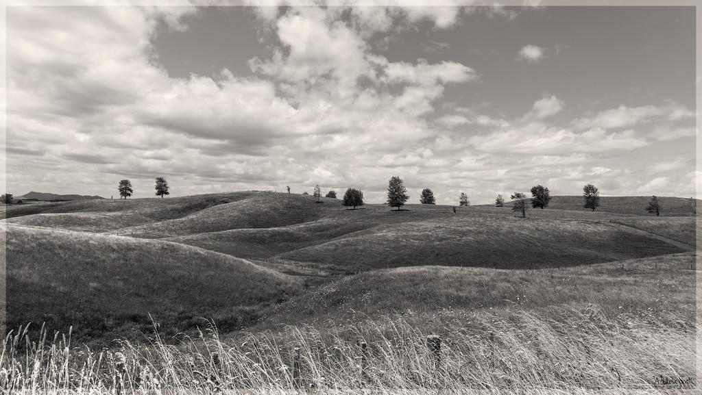 Rolling Hills by nickspicsnz