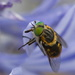 Surprise Guest - Agapanthus by kgolab