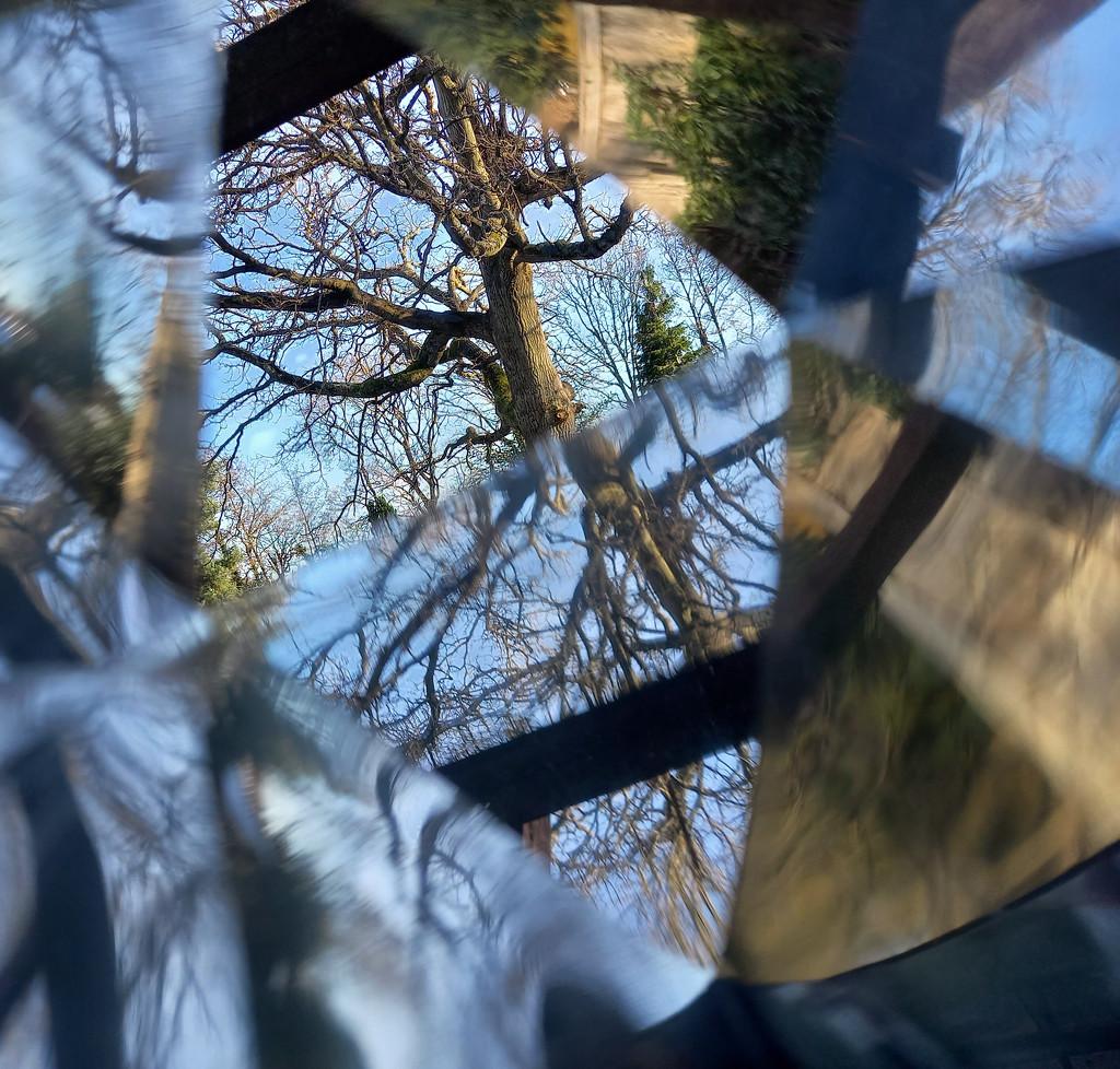 Jan 26th Oak Tree by valpetersen
