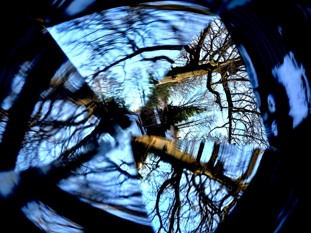 Jan 28th Oak Tree Through a Prism by valpetersen