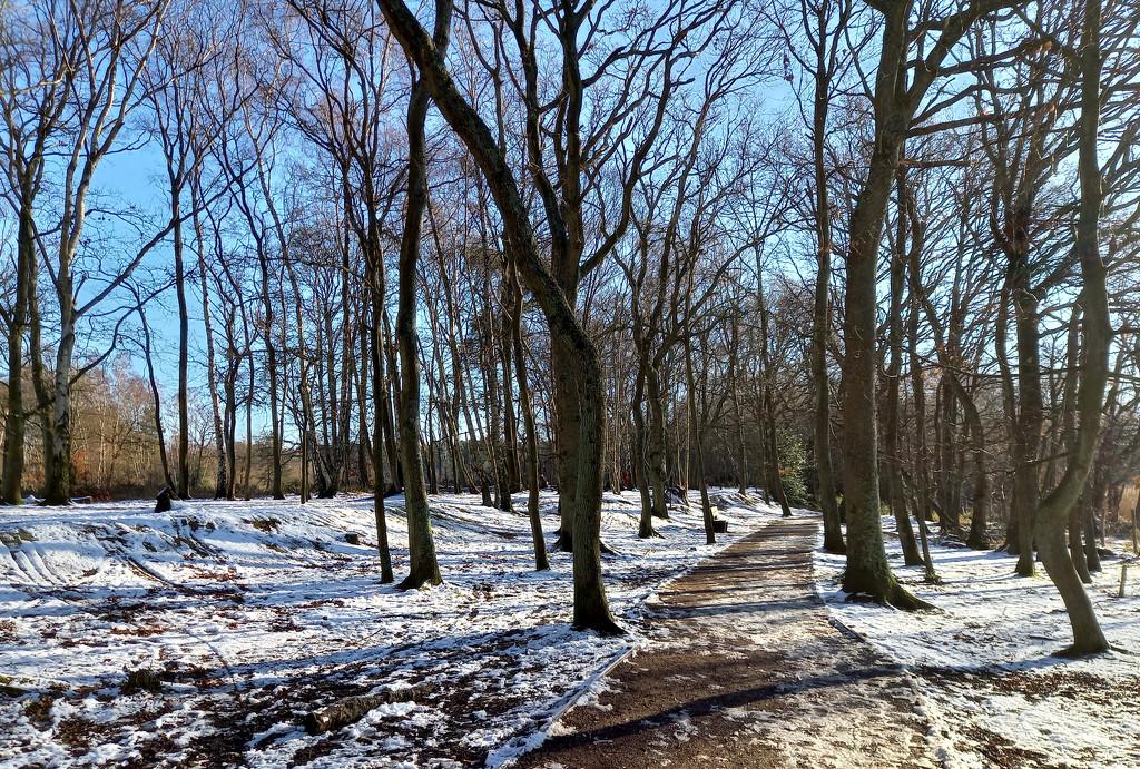 Jan 29th Snowy Path by valpetersen
