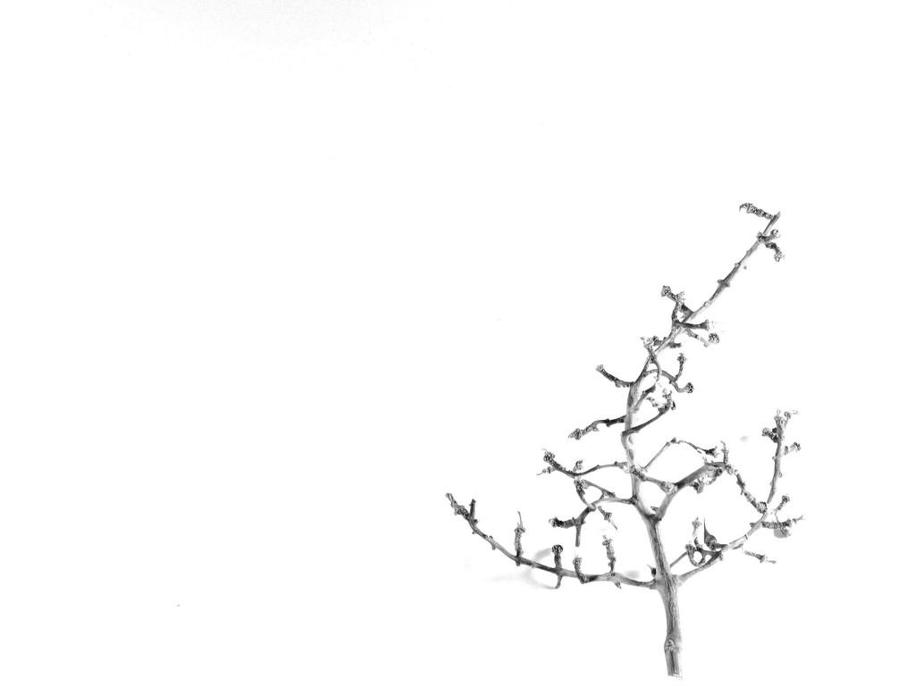 A Lone Tree.....Or Is It?! by grammyn