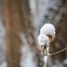Snowy day by haskar