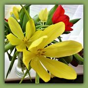 31st Jan 2021 - Tulips -2