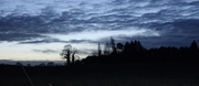 31st Jan 2021 - Blue Hour