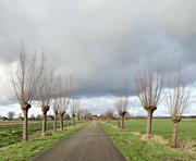 31st Jan 2021 - pollard willows