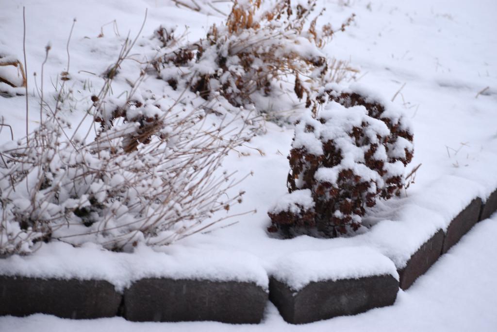 Finally...Snow! by bjywamer