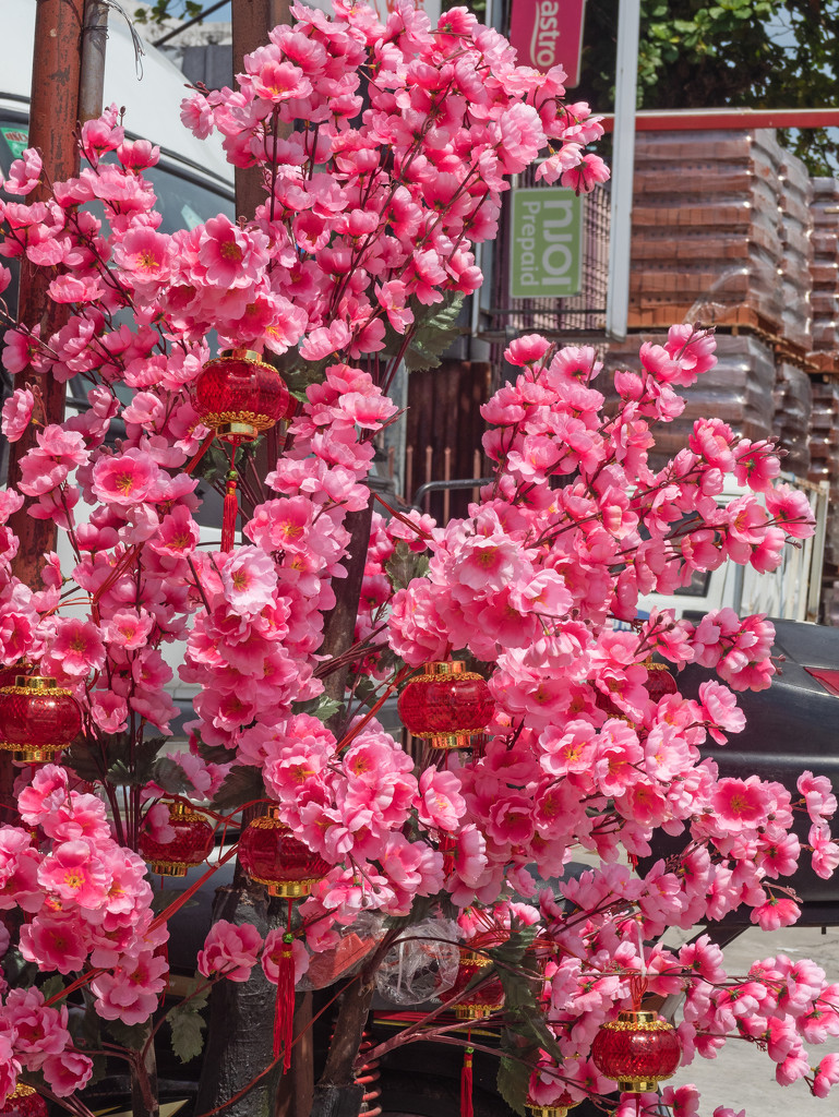 Chinese New Year Blossom by ianjb21