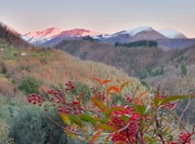 24th Jan 2021 - Pink Peaks