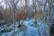 31st Jan 2021 - Swinister Woods