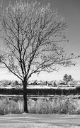 31st Jan 2021 - River