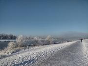 25th Jan 2021 - Cold