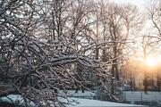24th Jan 2021 - Morning Sun