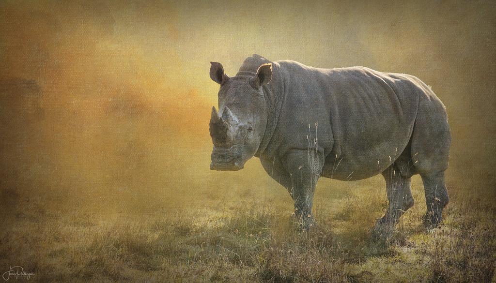 Rhino Approach  by jgpittenger