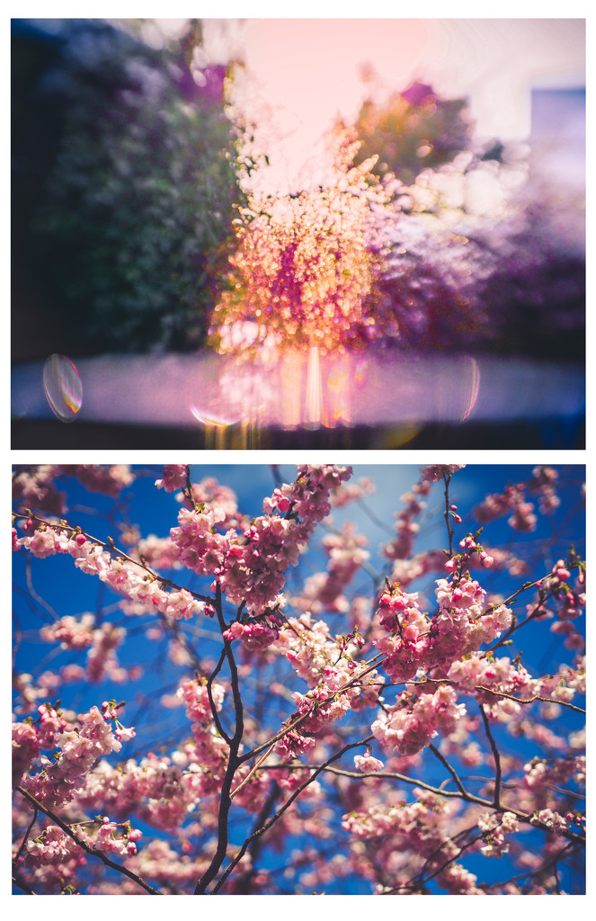 blossom and bloom by pistache