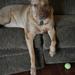 Mom, I dropped my toys! by homeschoolmom