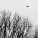 Flying above the Treeline 2